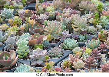 Group of cactus in a pot, succulent plant