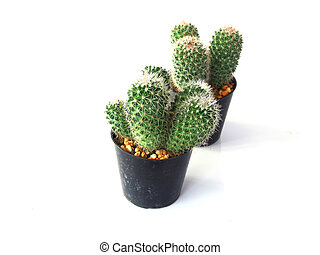 group of cactuses isolated on white background