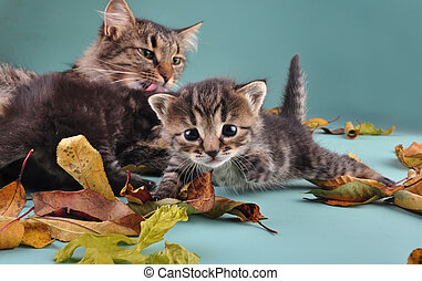 group of cats in autumn leaves