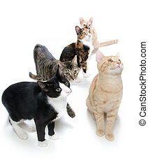 Group of cats on white