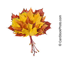Group of colorful autumn leaves