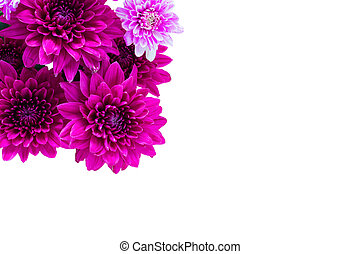 Group of colorful flower on white background