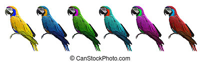 Group of colorful macaws bird isolated on white background with clipping path.