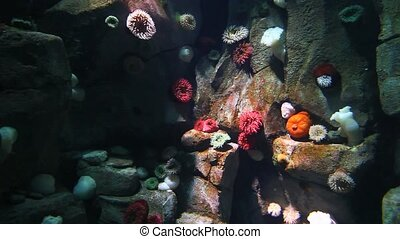 Group of Colorful Sea Anemones in an underwater scene