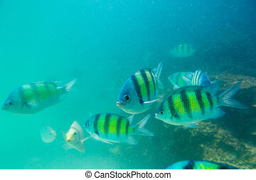 Group of coral fish in Andaman Sea