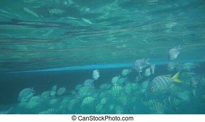 Group of coral fish in Andaman Sea near Krabi, Thailand.