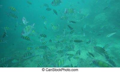 Group of coral fish in Andaman Sea near Krabi, Thailand.