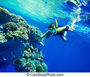 Group of coral fish in blue water. Scuba diver.