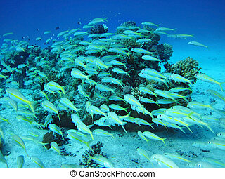 Group of coral fish in water.