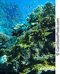 Group of coral fish in water. - Group of coral fish in blue...