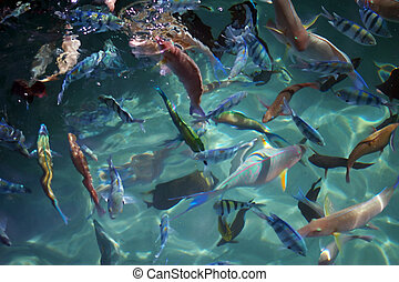 Group of coral fish. Red sea. Egypt