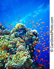 Group of coral fish water. - Group of coral fish blue water....