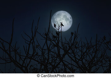 Group of crows sitting on a branch against a full moon