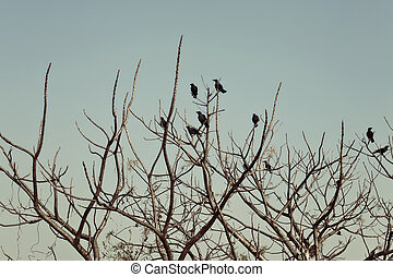 Group of crows sitting on the bare branches of a tree