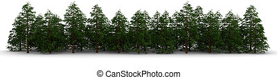 Group of cypress trees on a white background