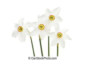 Group of daffodil flowers