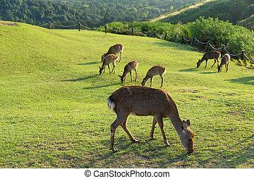 Group of deer at outdoor