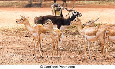 Group of deer in nature