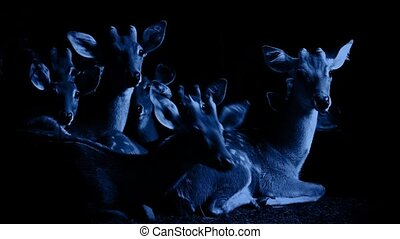 Group Of Deer Look Up At Night