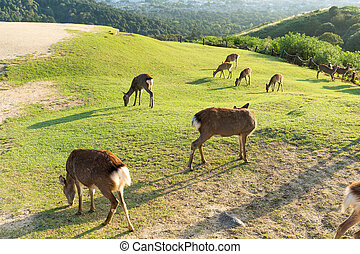 Group of deer