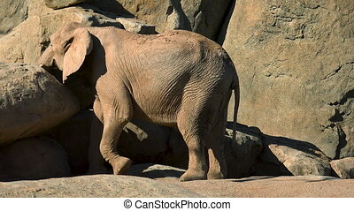 Group of desert elephants on a hot summer day, trying to...