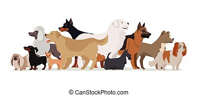 Group of Different Breeds Dogs.