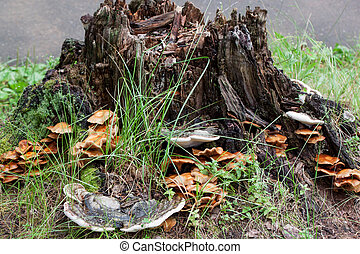 Group of different fungus are growing on a old stump....