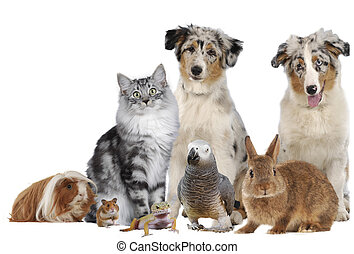 Group of different pets - different pets sitting together...