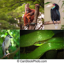 Group of different wild animal