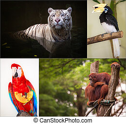 Group of different wild animal of Asia