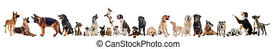 group of dogs and cats - group of dogs, puppies and cats on...