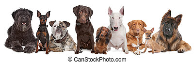 Group of Dogs isolated on a white background