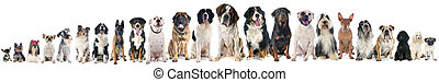 group of dogs of white background