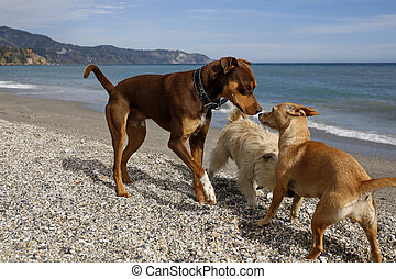 group of dogs on the beach