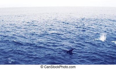 Group of dolphins in open ocean. View from boat - Group of...