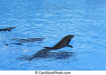 Group of dolphins swim in the blue water. Closeup of dolphin heads. Intelligent mammal in the pool. Bottlenose dolphin