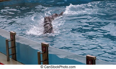 Group of Dolphins Swims Hugging Together in Dolphinarium in the Pool. Slow Motion
