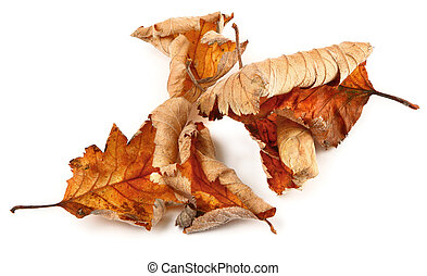 group of dried fall leaves