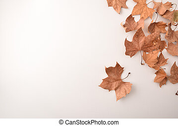 Group of dried platanus leaves in a corner on white - Group ...