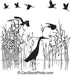 Group of Egrets in swampland illustration