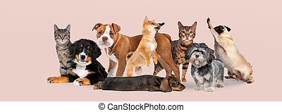 group of eight cats and dogs