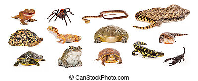 Group of Exotic Pets - Composite of exotic pets including...