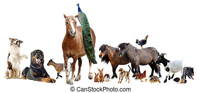 farm animals - group of farm animals in front of white...