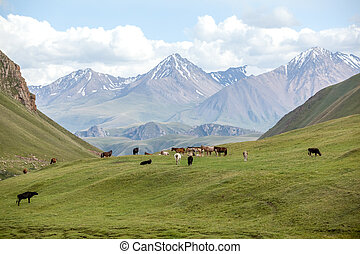 Group of farm animals pasturing in mountains