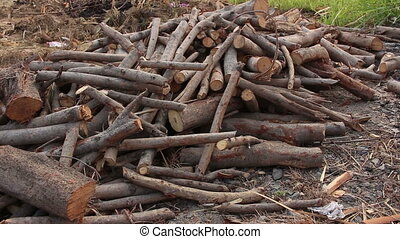 group of firewood, pan up shot