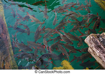 group of fish in the clear water