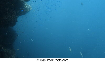 Group of fish on the deep blue sea