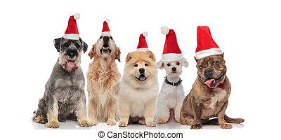 group of five dogs wearing santa hats panting