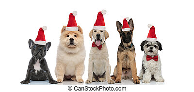 group of five little dogs wearing santa claus hat for christmas