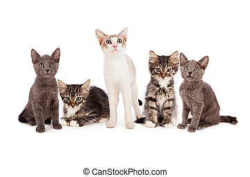 Group of five young kittens